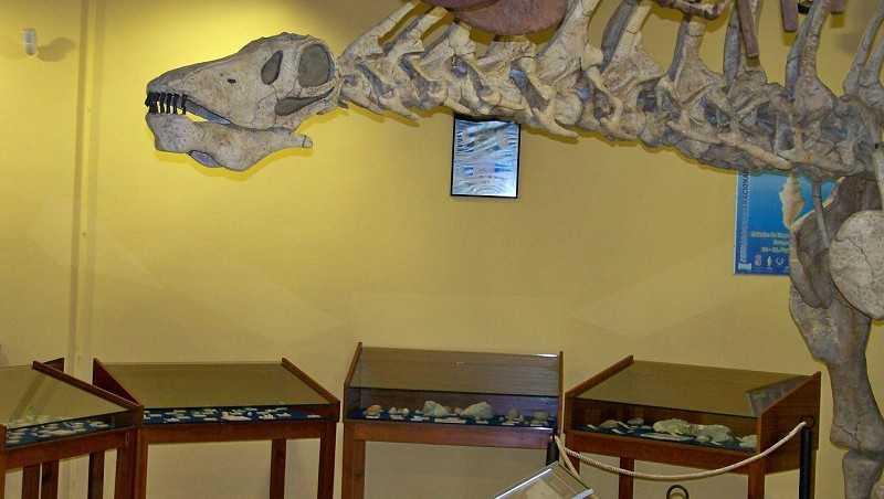 Restos de Dinosaurios